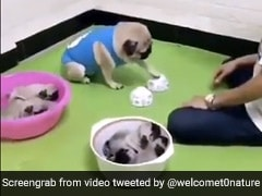 बच्चों को 'Kidnap' कर शख्स ने कुत्ते के साथ खेला खेल, पिता ने दिमाग लगाकर ऐसे छुड़ाया... देखें Video