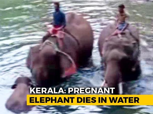 "Video : Virat Kohli ""Appalled"" By Killing Of Pregnant Elephant In Kerala"