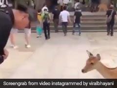 Viral Video: कमाल का है यह जापानी हिरण, मेहमानों का इस अंदाज में करता है वेलकम