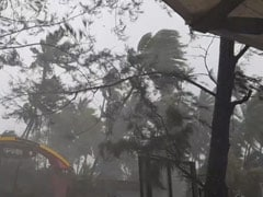 Cyclone Impact Video: Strong Winds, Rain Pound Alibaug, Trees Uprooted