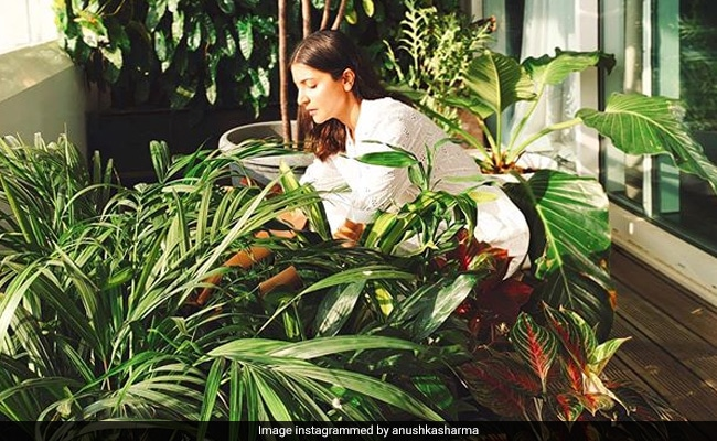 Anushka Sharma Is Back With Another Pic Of Her Mumbai Apartment. This Time, Her Home Garden