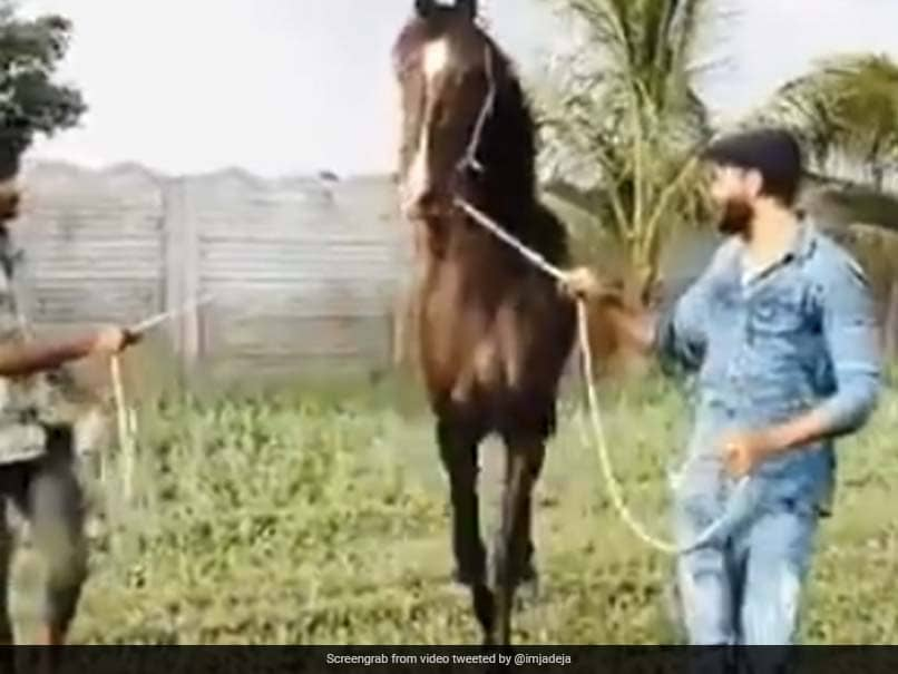 Watch: Ravindra Jadeja Spends Time With His Horse In Latest Video