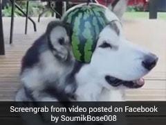 तरबूज को काटकर बनाया टोपी और पहना दिया कुत्ते को.... देखें Viral Video