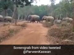 जब बीच सड़क पर आ गया हाथियों का बड़ा झुंड और फिर.... देखें Viral Video