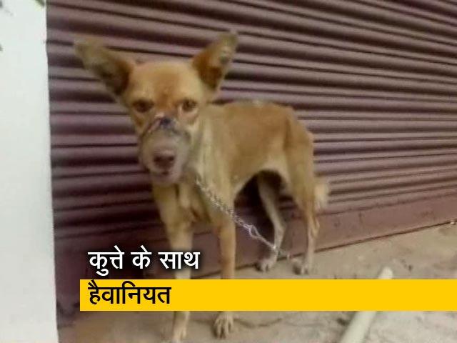 Videos : कुत्ते के साथ हैवानियत मुंह पर बांधा प्लास्टिक का टेप