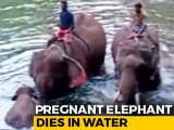 "Video : Virat Kohli ""Appalled"" By Killing Of Pregnant Elephant In Kerala"