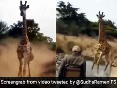 जंगल में घुसी गाड़ी तो गुस्सा गया जिराफ़, लगा दी पीछे दौड़ और फिर किया कुछ ऐसा... देखें Viral Video
