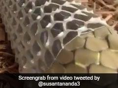 सांप का केंचुली उतारने का Video हुआ वायरल, जानिए इसके पीछे का राज