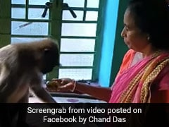 Video Of Woman Feeding Dal Rice To Langur Goes Viral On Social Media