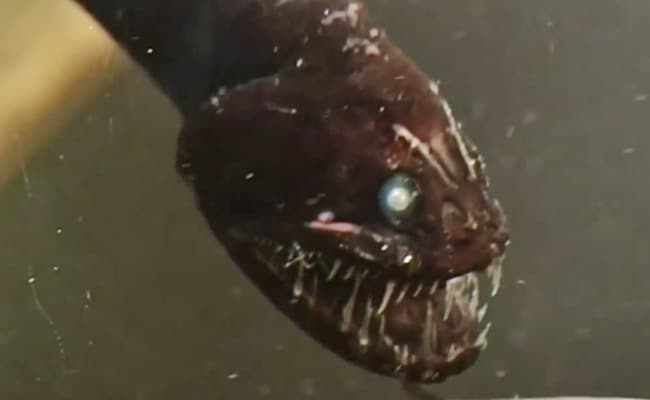Video: Top 10 Mysterious Creatures That Live In The Deep Sea