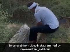 नवाजुद्दीन सिद्दीकी गांव में बने किसान, सिर पर साफा बांधे खेतों में काम करते नजर आए एक्टर- देखें Video