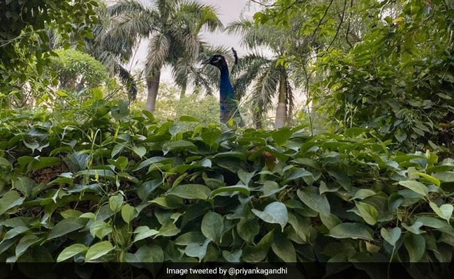 """An """"Unexpected Visitor,"""" Captured In Stunning Pic By Priyanka Gandhi Vadra's Son"""