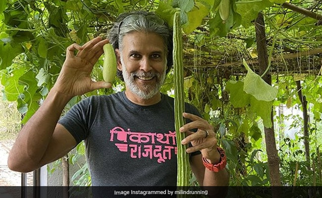 "What's Growing In ""Bearded Farmer"" Milind Soman's Vegetable Garden At Home"