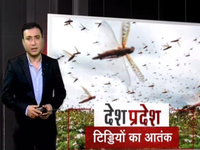 Video : देश- प्रदेश: देश के हिस्सों में टिड्डियों का आतंक