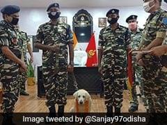 "Sashastra Seema Bal Dogs ""Pinki"" And ""Chetan"" Honoured On Retirement"