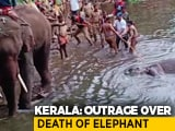 "Video : ""Intentional Act To Kill The Elephant"": Kerala's Top Wildlife Officer"