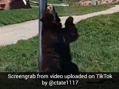सड़क के किनारे खड़े होकर भालू करने लगा 'पोल डांस', देखें TikTok Viral Video