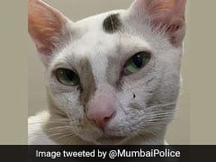 """Meow Meow"": Mumbai Police Tweets Cat Pic To Send A Warning"