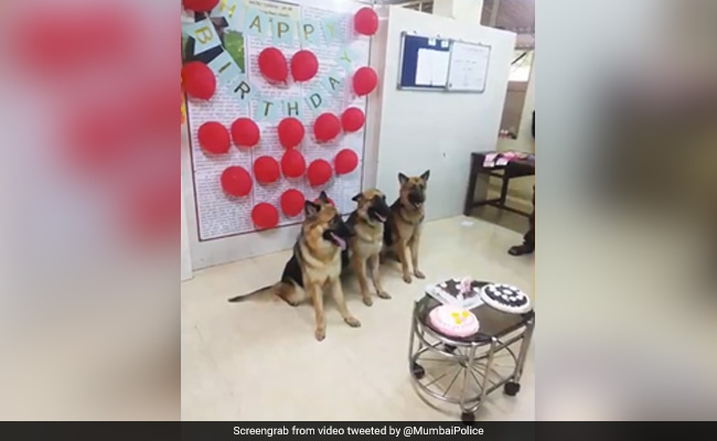 In Mumbai, Police Dogs-In-Training Celebrate First Birthday With Cakes, Balloons