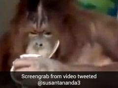 बंदर हाथ में कप पकड़कर पीने लगा कॉफी, सोशल मीडिया पर Video वायरल