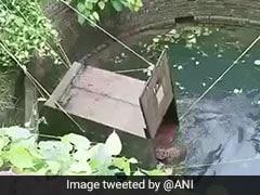 देर रात कुएं में गिर गया तेंदुआ, पिंजरा डालकर इस तरह बचाई गई जान... देखें VIDEO