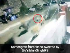 सड़क पर आते ही गाय के झुंड के पीछे भागा तेंदुआ और फिर... CCTV में कैद हुआ Shocking Video