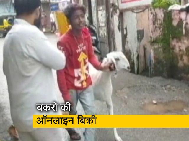 Videos : मुंबई में ऑनलाइन मिल रहे हैं बकरे