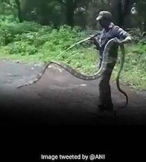 15-Feet Long King Cobra Rescued From Tamil Nadu Village