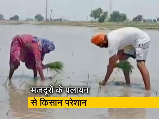 Video : पंजाब में मजदूरों के पलायन से किसानों की मुश्किलें बढ़ी