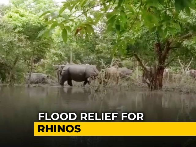 Video : In Assam, Flood Relief Now For Rhinos Too   NDTV Beeps