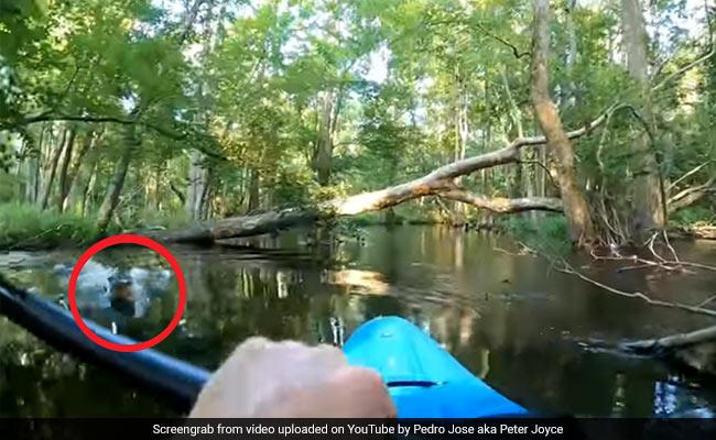 मगरमच्छ ने नाव पर बैठे शख्स पर किया Attack, पलट गई नाव और फिर... देखें Video