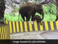 On Camera, Elephant In Kerala Uses Trunk To Help Calf Over Barrier. Watch