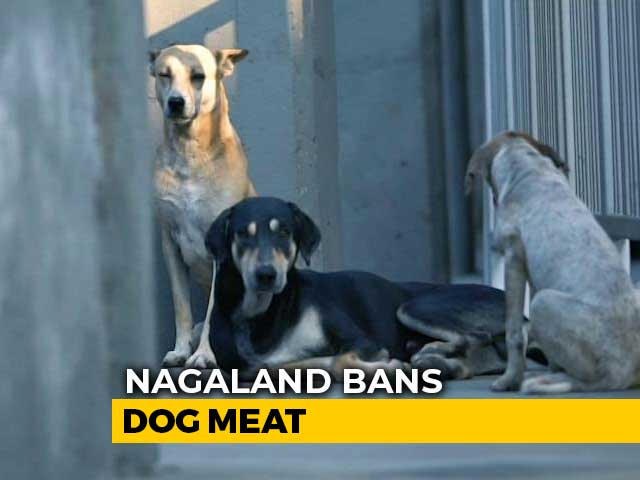 Video : Nagaland Bans Dog Meat After Uproar On Internet