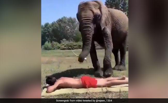 तेल लगाकर अपने मालिक को पैर से पीठ दबाते हुए हाथी का वीडियो हुआ वायरल