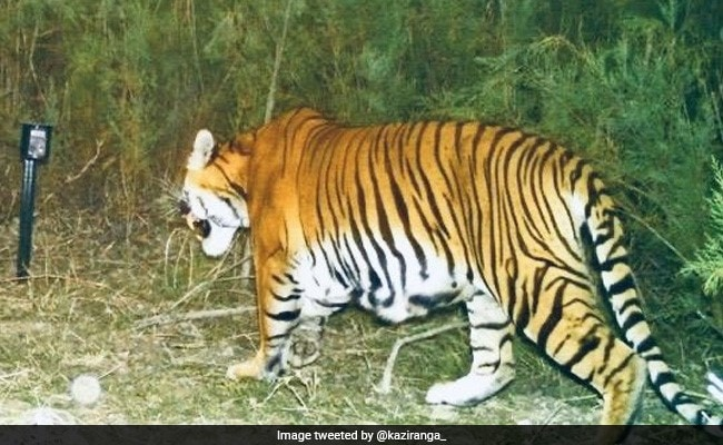 After 15 Years, Camera Trap Shows Successful Breeding Of Tigers In Assam