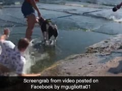 Man Falls Into Lake Right Before Proposing To Girlfriend. Video Is Viral