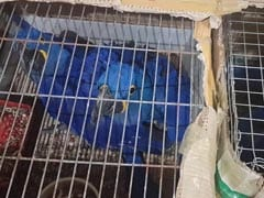 Kangaroo, Macaw Parrot, Being Smuggled At Assam-Mizoram Border, Recovered