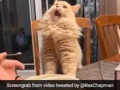 Why This Viral Video Of Cat Tasting Ice Cream Has Divided Twitter