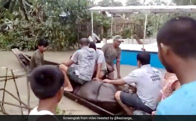 बाढ़ में मां से अलग हुआ गैंडे का बच्चा तो लोगों ने बिठाया नाव में और किया यह काम... देखें Viral Video