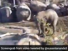 नदी किनारे पानी पी रहे हाथी को बत्तख ने किया परेशान, हाथी ने उठाया पैर और फिर.. देखें Video
