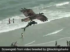 Is That Bird Holding A Shark? Viral Video Leaves Internet Stunned