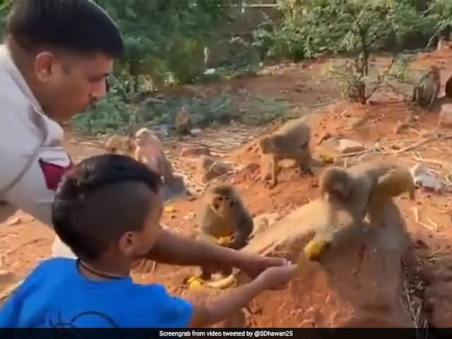 Watch: Shikhar Dhawans Son Zoraver Hesitantly Offers Fruits To Animals