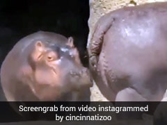 पानी में कूदने से पहले गैंडे ने दांत से खींची दोस्त की पूंछ और फिर... देखें मजेदार Video