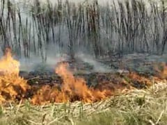 No Buyers, Punjab Farmer Sets On Fire Sugarcane Crop Worth Rs 5 Lakh
