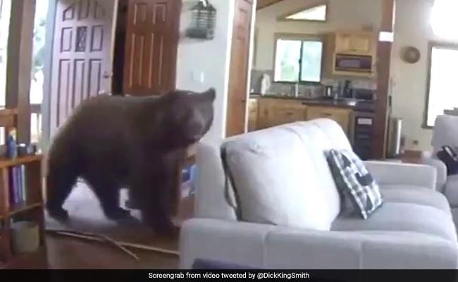 दरवाजा तोड़कर घर के अंदर घुसा भालू, फिर किया कुछ ऐसा... 50 लाख से ज्यादा बार देखा गया Video