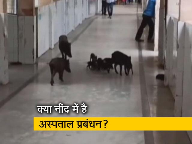 Videos : कर्नाटक के कोविड अस्पताल के अंदर घूमते दिखे जानवर