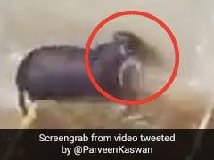 बारिश में डूब रहे थे चूहे के बच्चे, मां ने पानी से भरे बिल में घुसकर ऐसे बचाई जान - देखें Viral Video