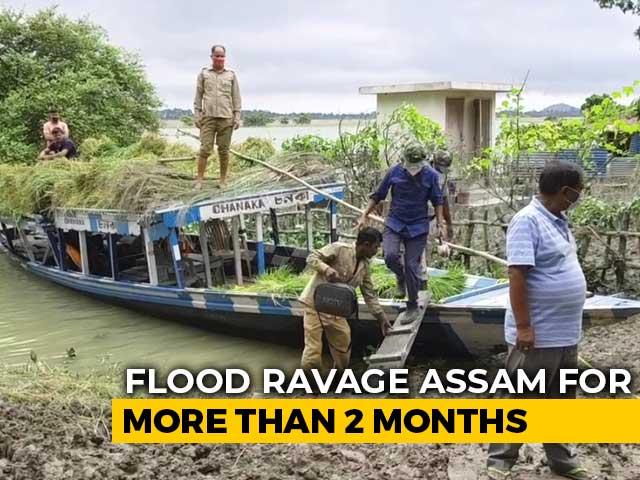 Video : Unprecedented Floods Create Food Shortage For Rhinos In Assam's Pobitora
