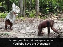 दोस्त को बार-बार परेशान कर रहा था वनमानुष, गुस्से में उठा और ऐसे कर दी पिटाई... देखें मजेदार Video