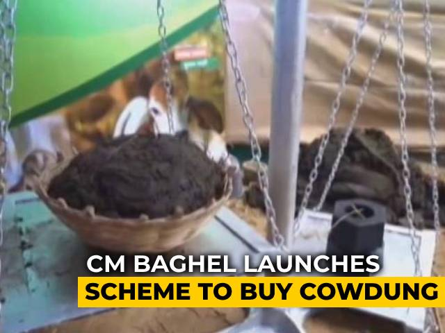 Video : Chhattisgarh Government Launches Scheme To Buy Cow Dung